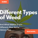 Different Types Of Weed: (The Big 3) Sativa, Indica & Ruderalis DETAILED